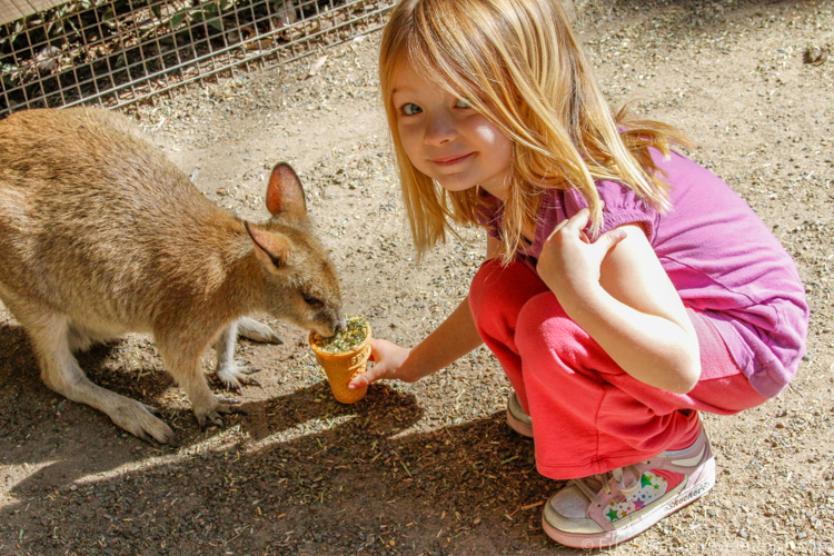 Best age to travel - Feeding a kangaroo at Featherdale Wildlife Park in Australia at 4