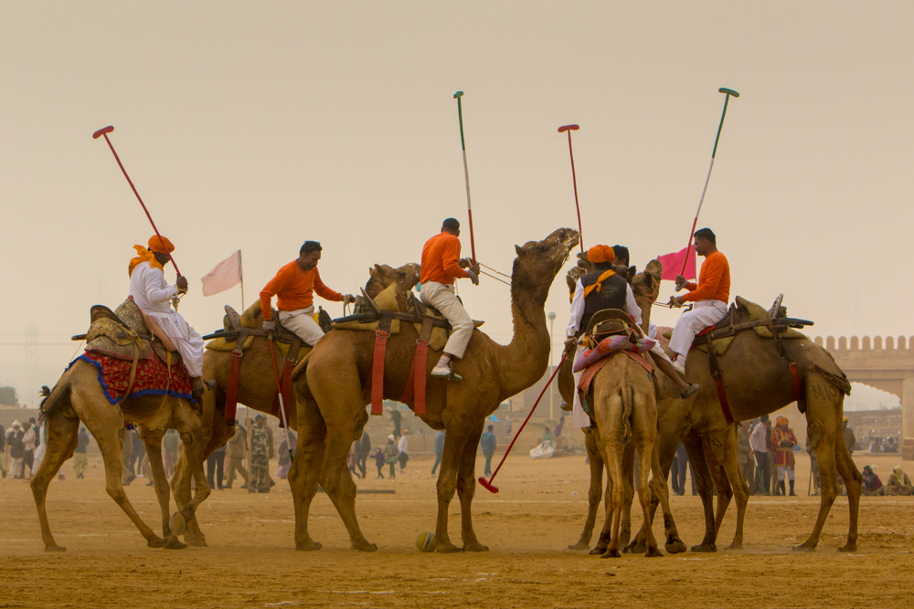 Things to see in India: Camel Polo