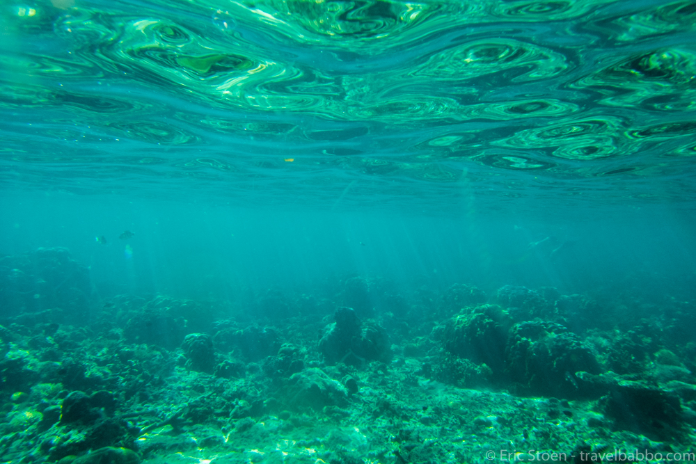 Palawan with Kids - I didn't take many photos snorkeling. This one shows what the amazing water looks like from below.