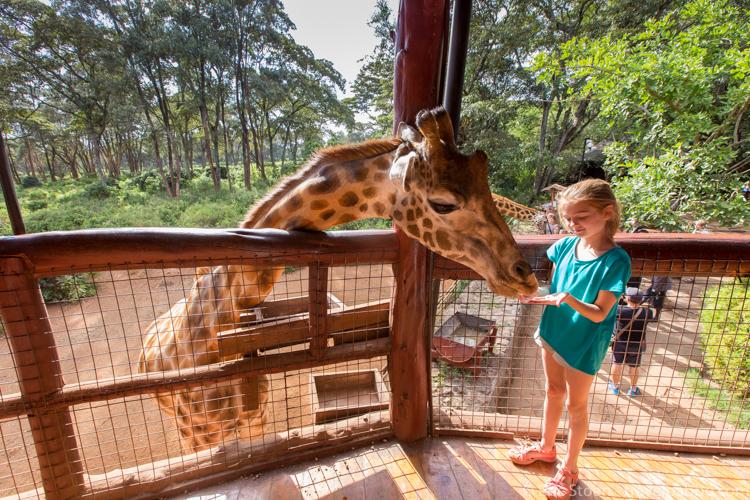 Giraffe Manor - At the Giraffe Center