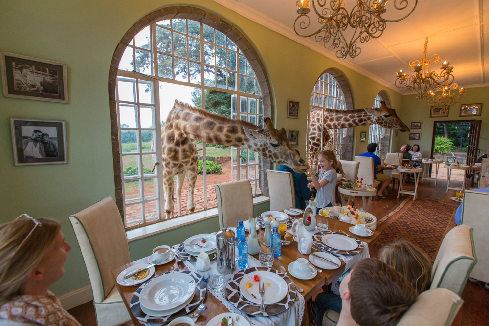 a stay at giraffe manor travel babbo